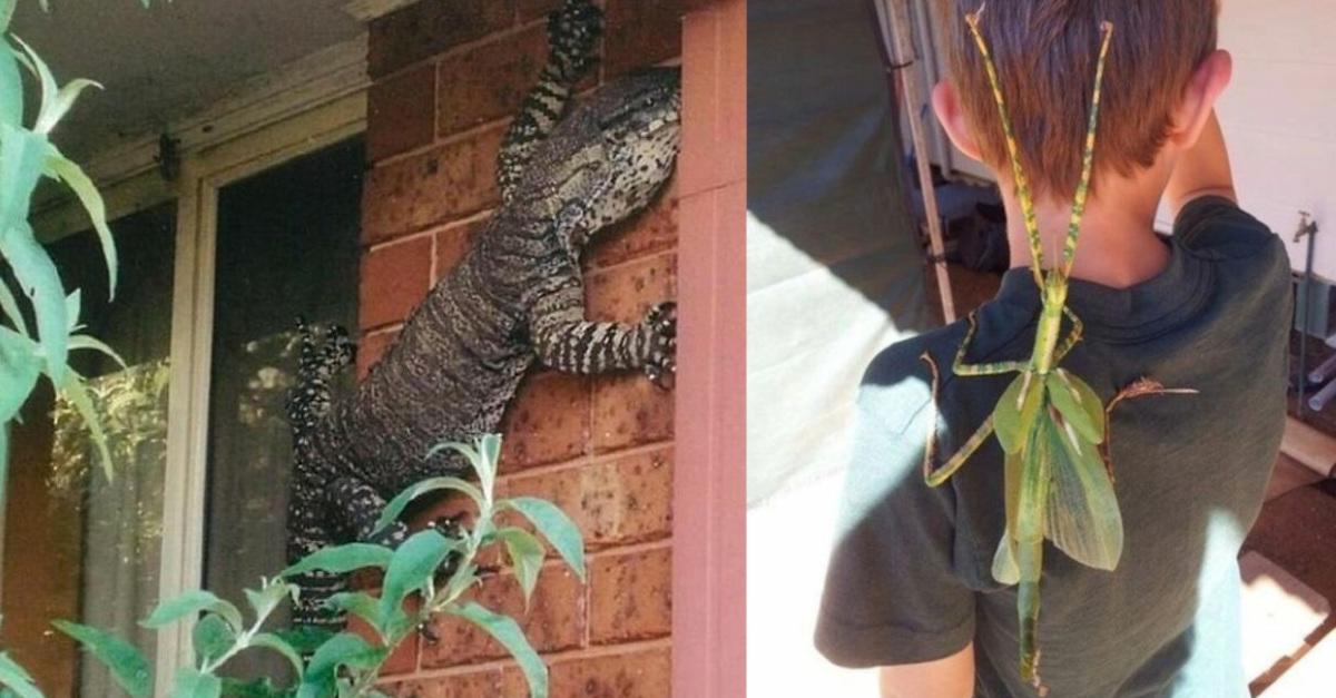 14 foto che mostrano che l'Australia è un posto meraviglioso ma non per tutti