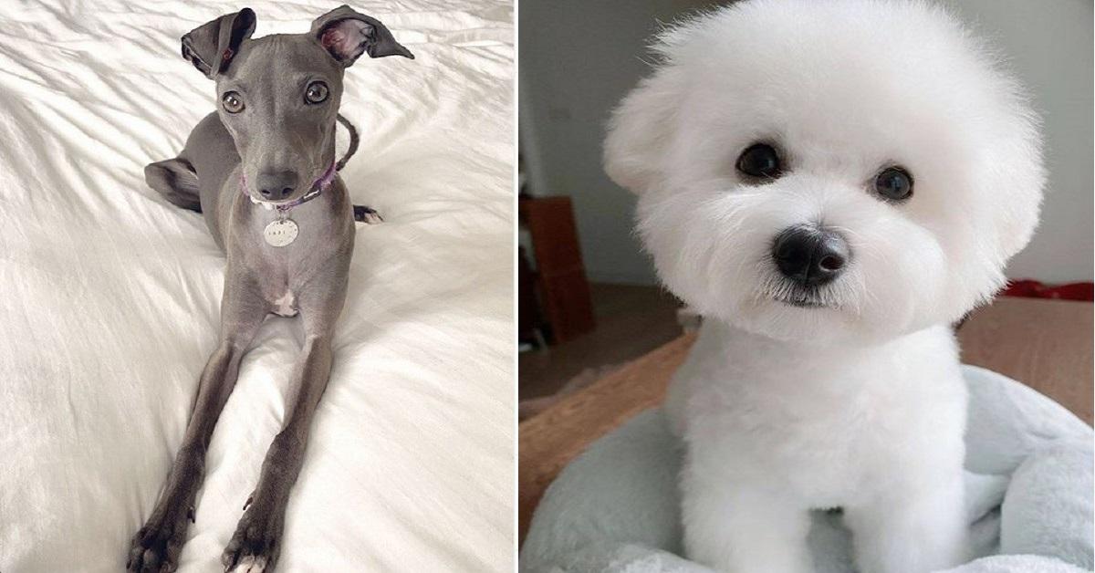 10 razze di cani per chi ama le taglie piccole