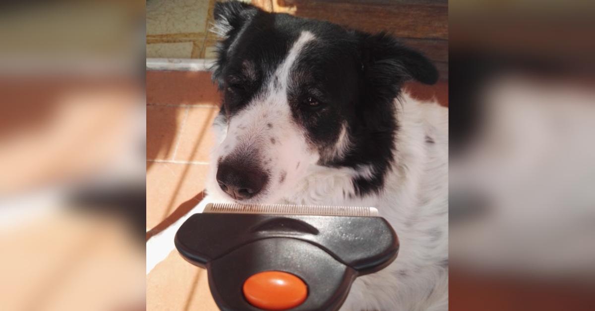 Come far brillare il pelo del tuo cane: alcuni consigli fai da te