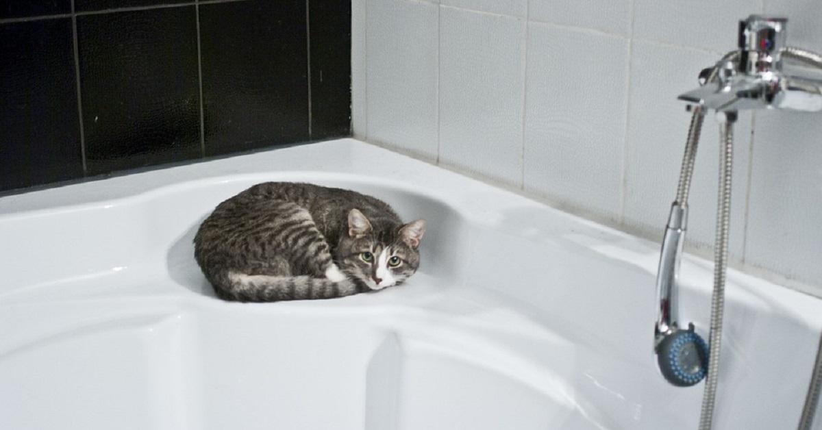 Il gatto ti segue spesso in bagno? Dietro questo comportament c'è sempre una ragione