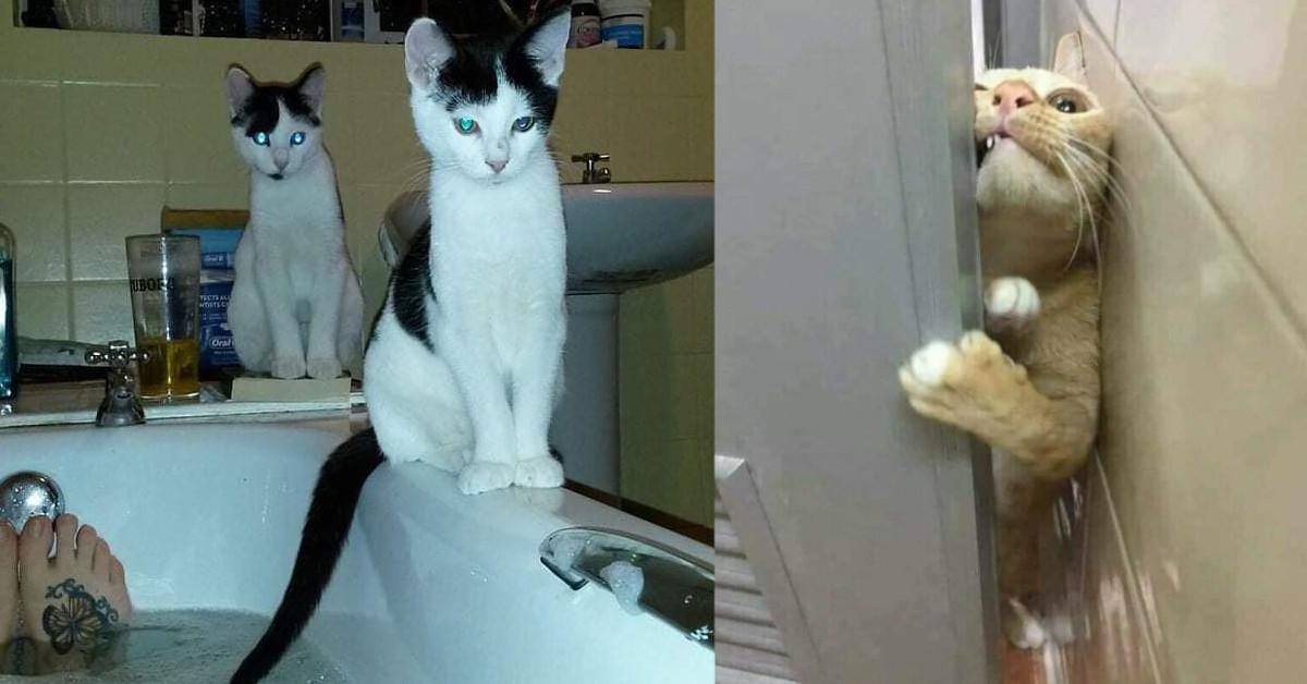 20 volte in cui i gatti violano la privacy dei loro padroni in bagno