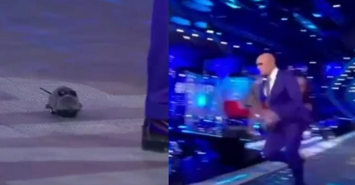 Topo in studio al Gf Vip, Signorini entra nel panico e scappa, ma era solo uno scherzo (IL VIDEO)