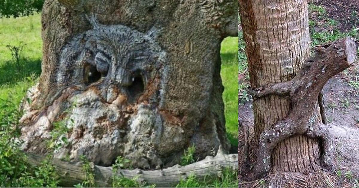27 alberi insoliti e affascinanti che somigliano ad altro, occorre osservarli più volte