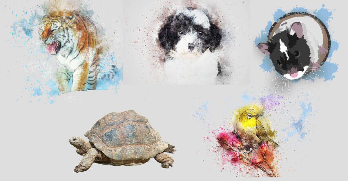 Test: quale animale adotteresti? La tua scelta rivelerà il tuo stato emotivo