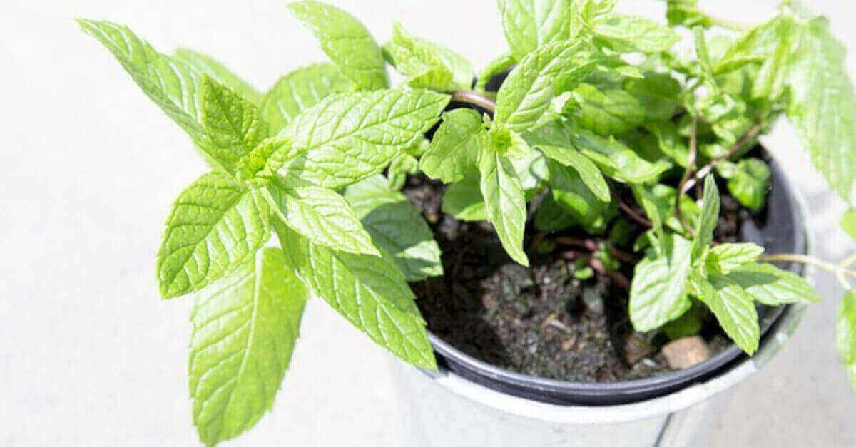 3 consigli per far crescere le piante aromatiche