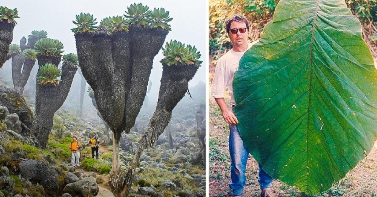 15 immagini che ti faranno sentire una piccola formica in un mondo gigantesco