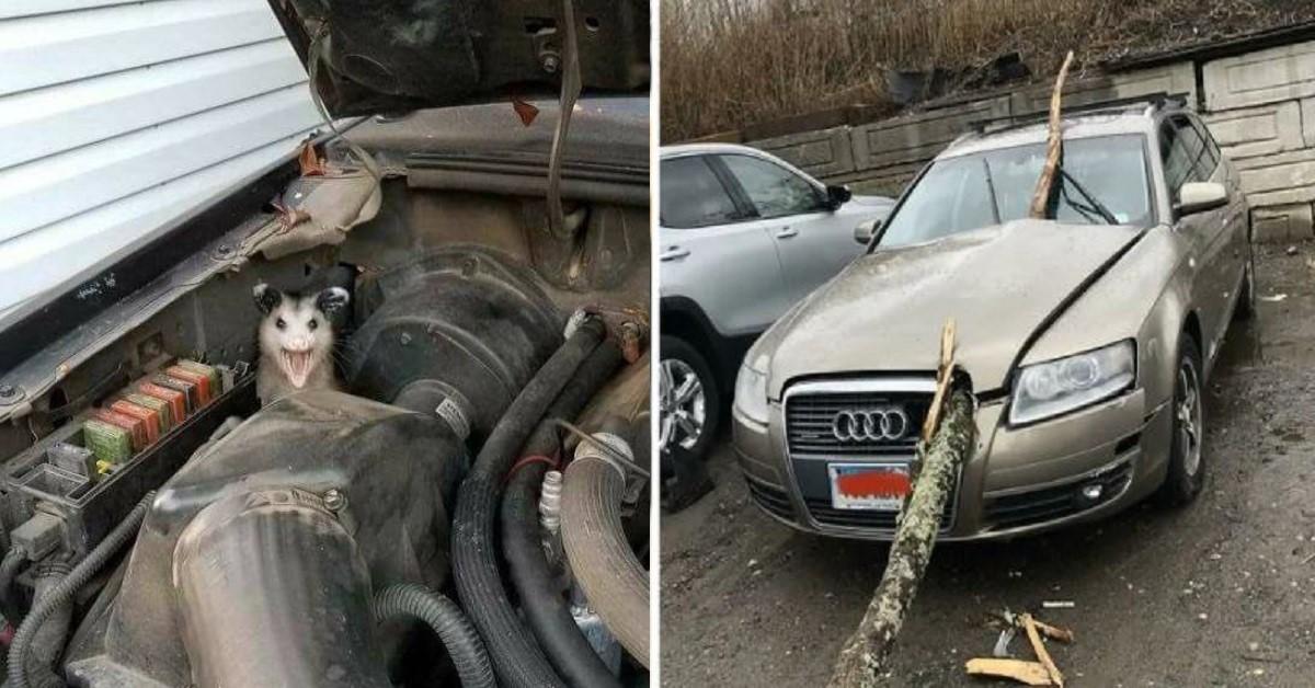 14 volte che i meccanici hanno trovato nell'auto da riparare qualcosa che non potevano neanche immaginare