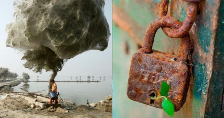12 foto che dimostrano la potenza di adattamento della natura