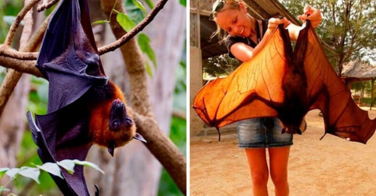 27 pipistrelli dall'aspetto molto strano, alcuni sembrano carini altri spaventosi