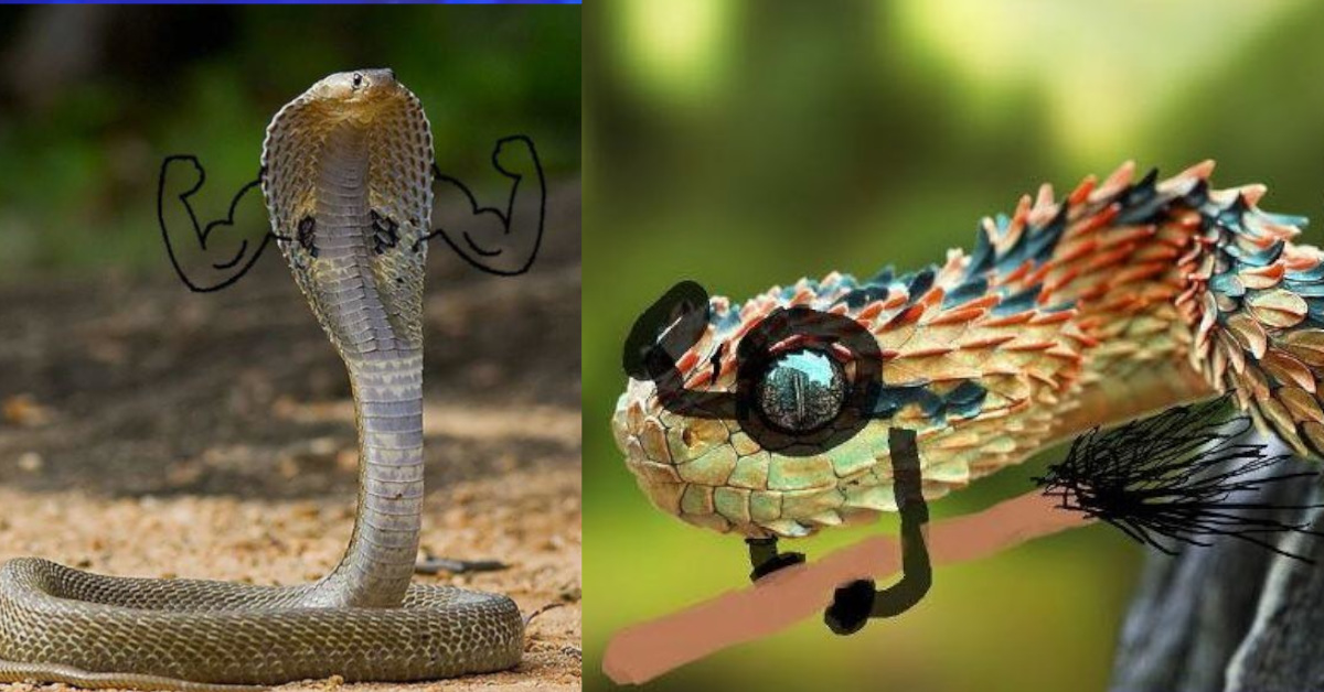 29 serpenti che alcuni utenti  del web hanno reso divertenti disegnandogli le braccia