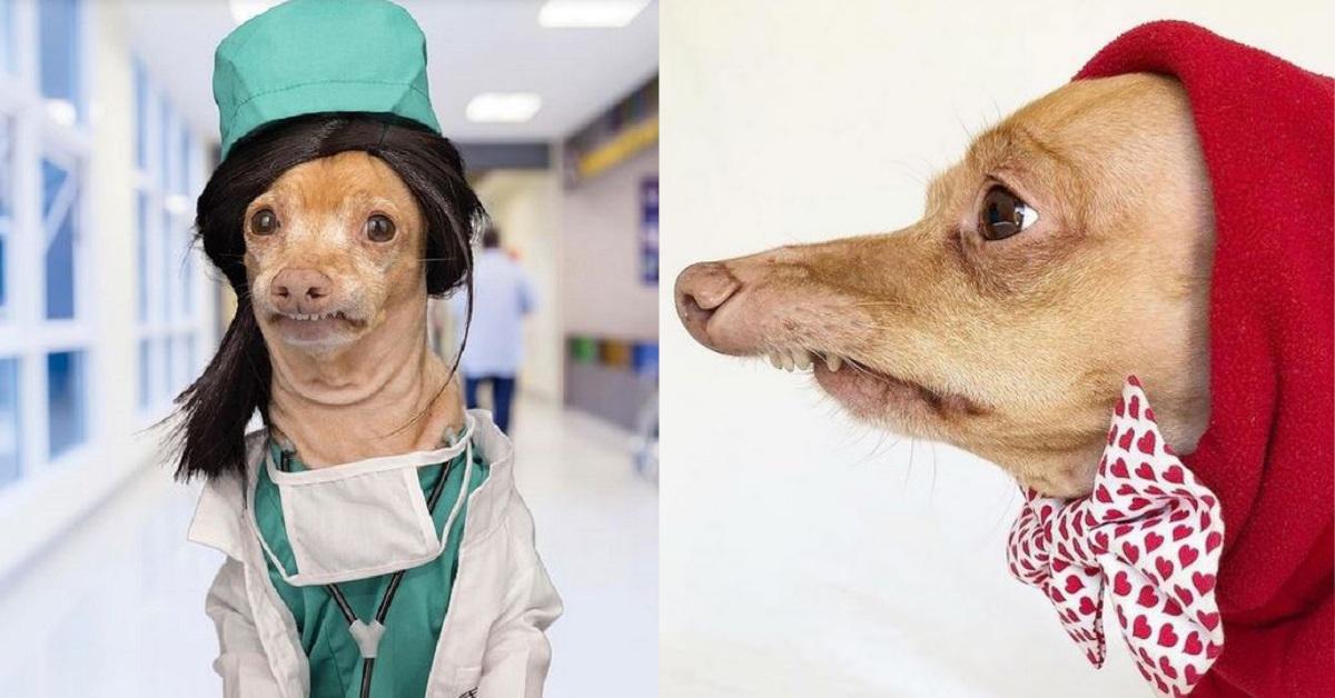 12 Foto di  Tuna un cane diventato star di Instagram per via del suo aspetto particolare