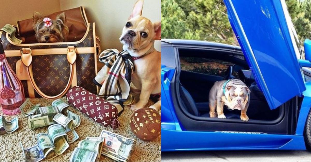 16 cani ricchi che vivono una vita ben più lussuosa di quella della maggior parte di noi