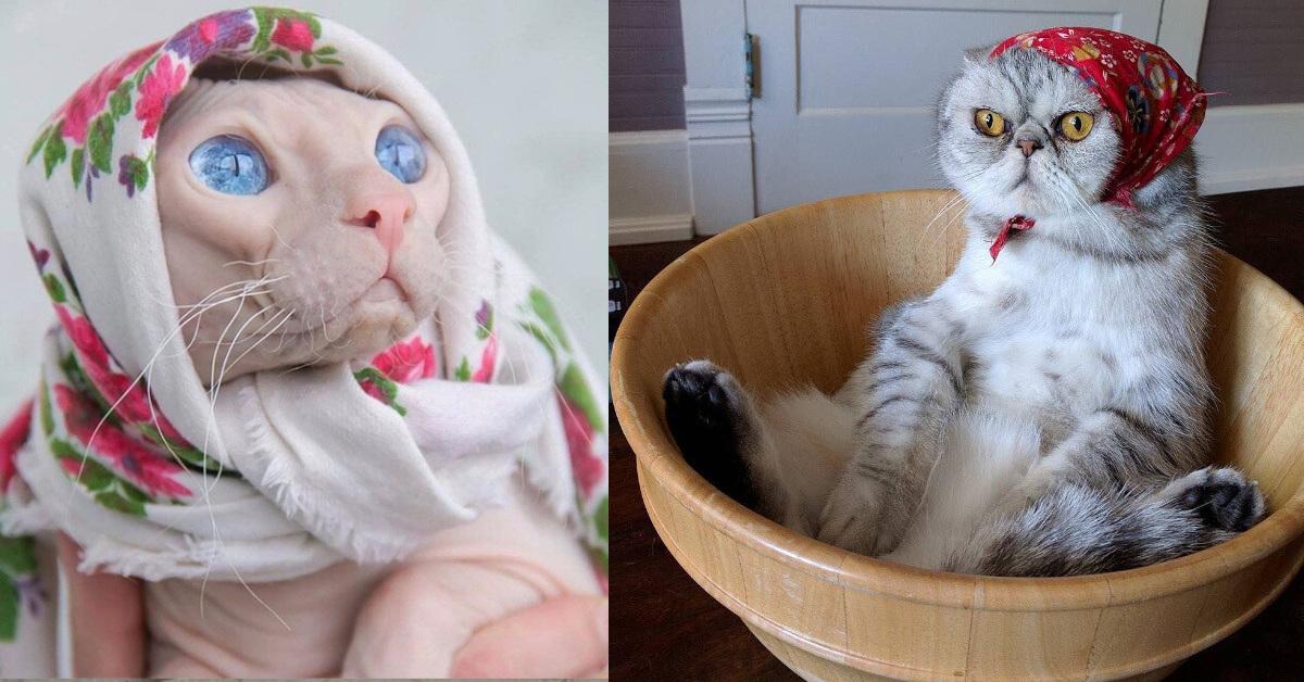14 Gatti Babushka: la moda social di trasformare i gatti come le tradizionali vecchie signore russe