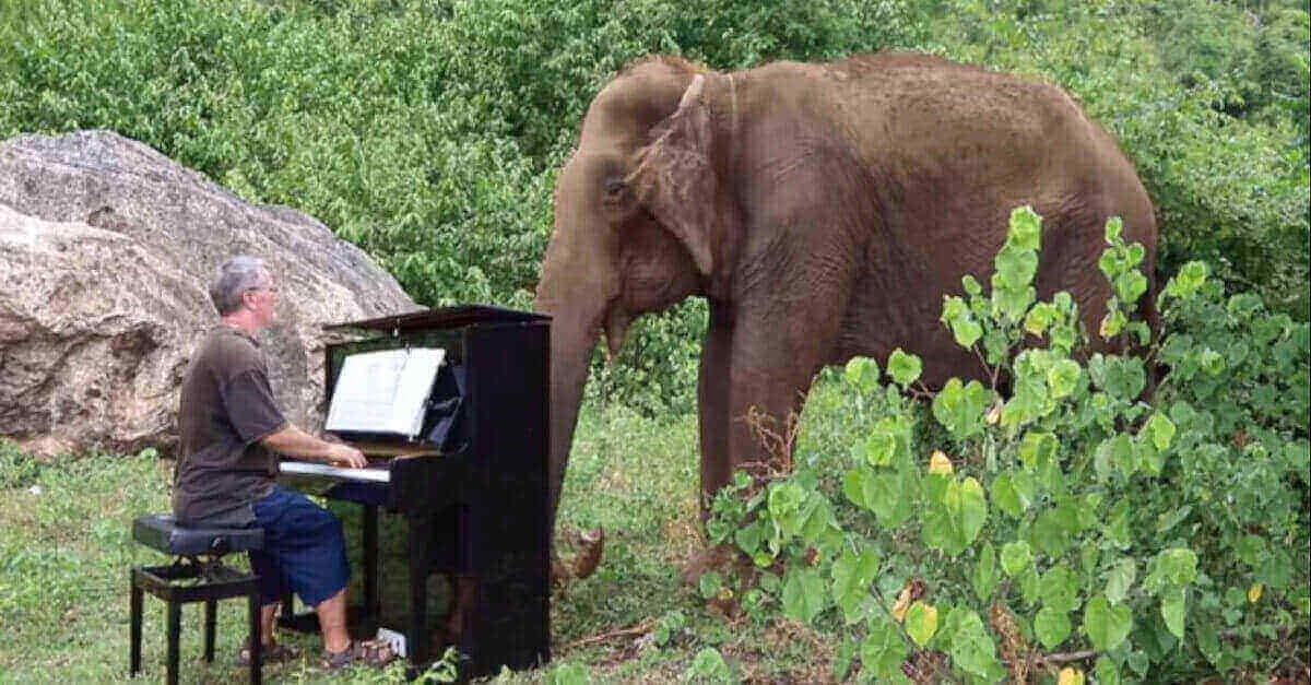 Elefante cieco di 80 anni si rilassa ascoltando musica classica