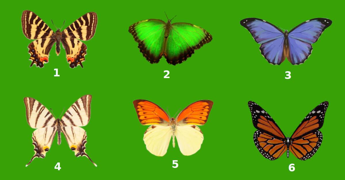 TEST: scegli una delle farfalle e ti diremo la chiave della tua personalità