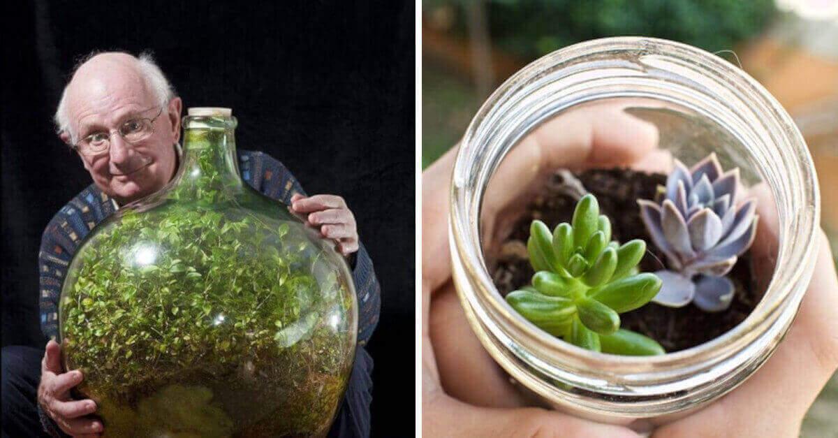 Come usare i barattoli e le bottiglie di vetro per creare dei bellissimi giardini in miniatura