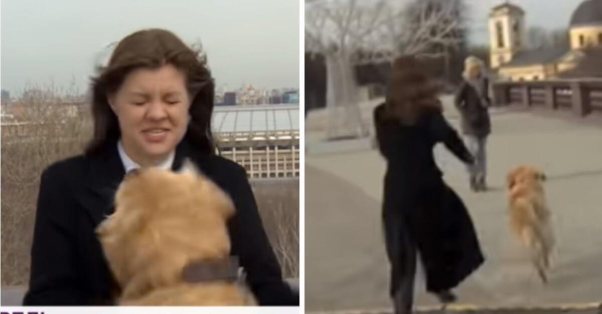 Il cucciolo ruba il microfono alla giornalista in diretta e lei lo insegue; il video divertente diventa virale