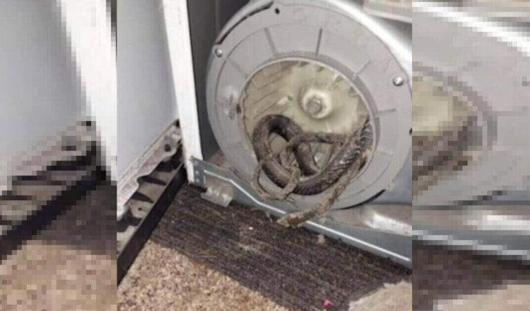 L'asciugatrice si guasta e, durante la riparazione, il tecnico trova un serpente nel motore dell'elettrodomestico