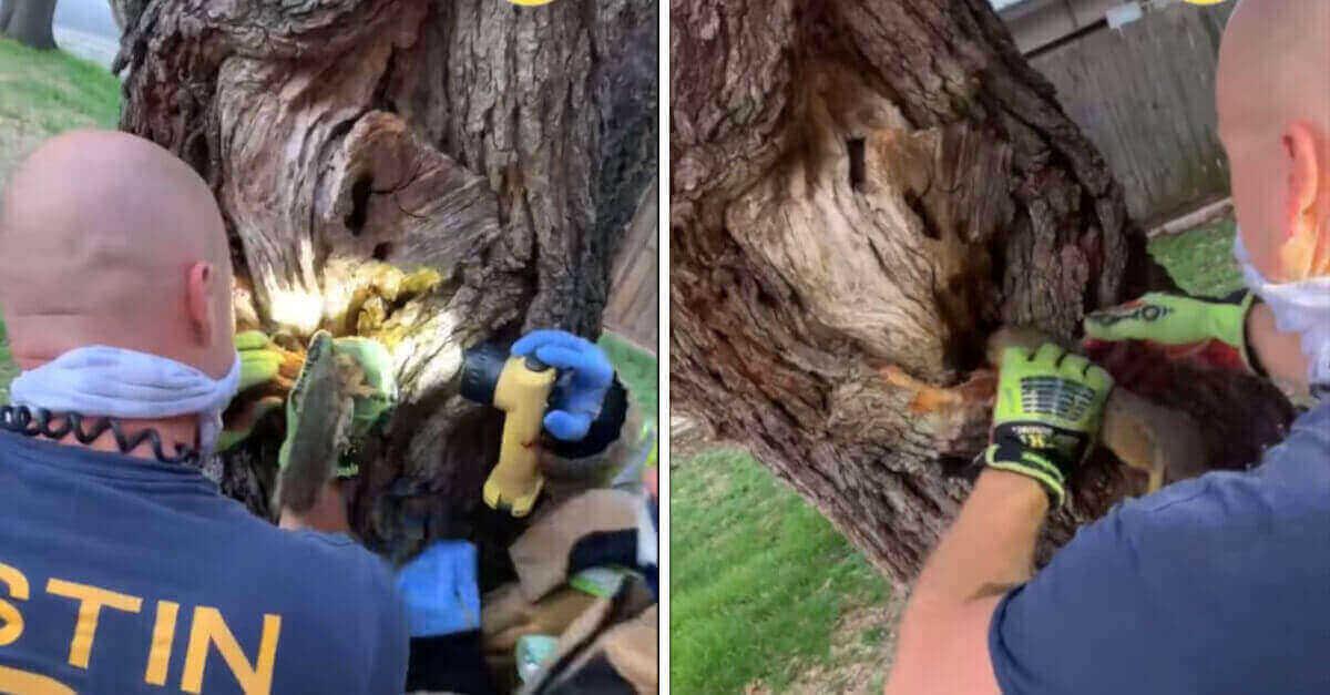 I vigili del fuoco salvano uno scoiattolo con la testa intrappolata in un albero, il video del salvataggio