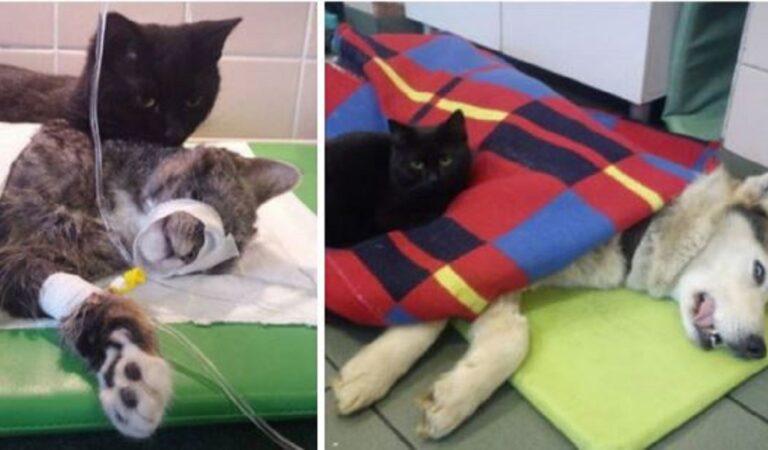 18 gatti che aiutano gli umani nei loro lavori. Alcuni sono diventati famosi