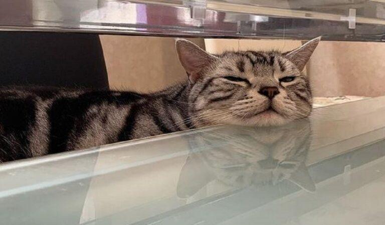 I gatti perfetti con i quali convivere in casa, la loro personalità vi conquisterà: belli, buffi e coccolosi