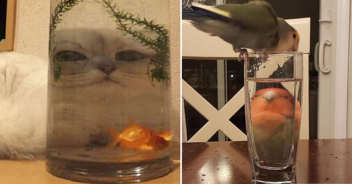 19 foto buffe di animali visti attraverso oggetti in vetro trasparenti