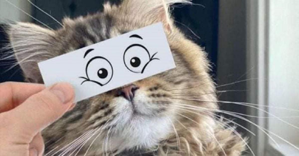 19 stati emozionali mostrati in modo divertente da alcuni gatti