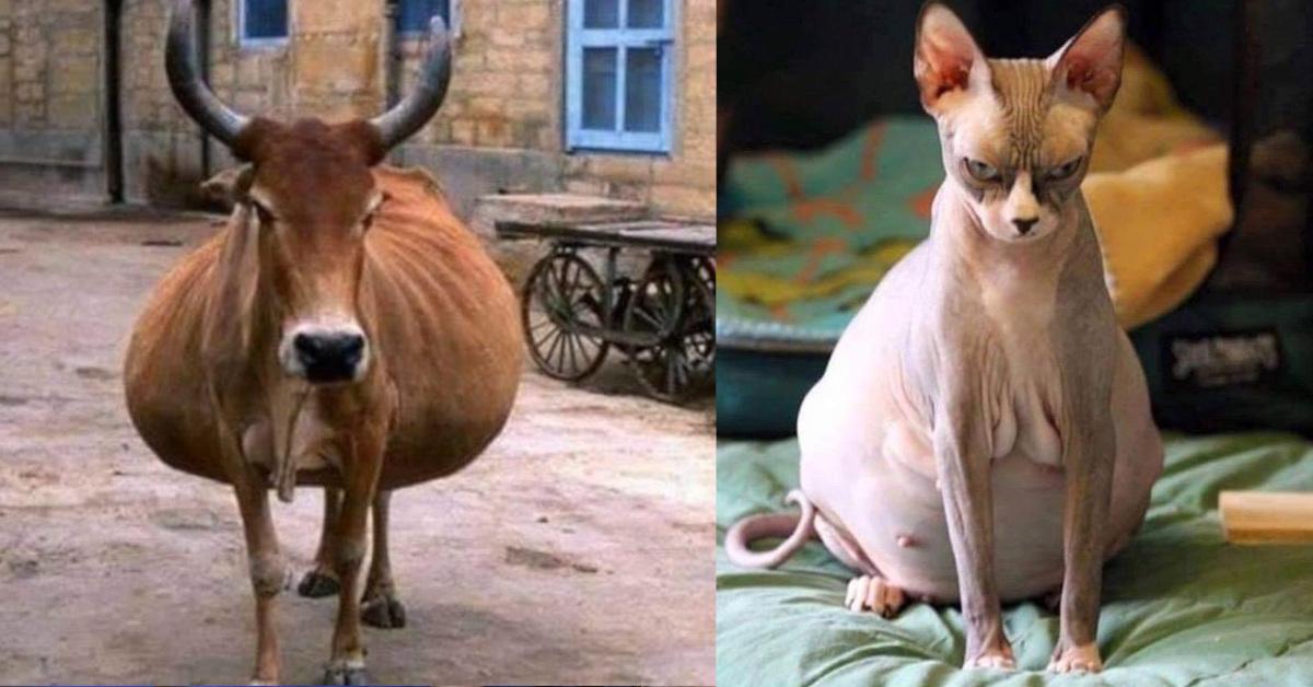 19 animali prima del parto, le foto mostrano gli ultimi giorni della gestazione