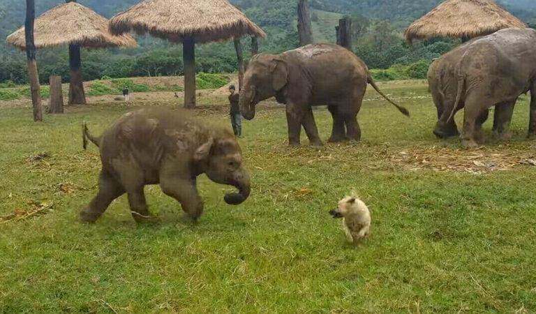 L'adorabile video di un elefantino che gioca con un cane ottiene oltre 15 milioni di visualizzazioni