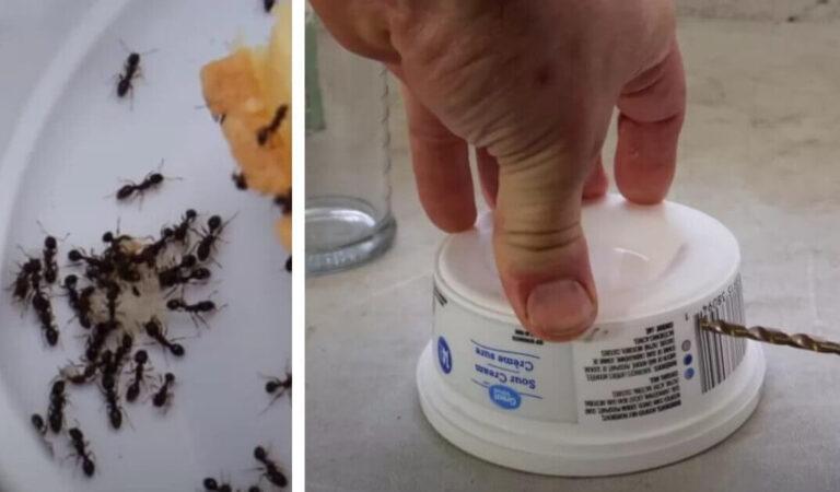 L'uomo condivide un trucco economico e facile per sbarazzarsi facilmente delle formiche