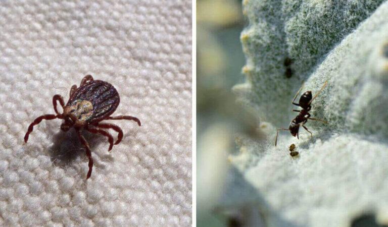 Come eliminare parassiti, formiche ed altri insetti in modo naturale