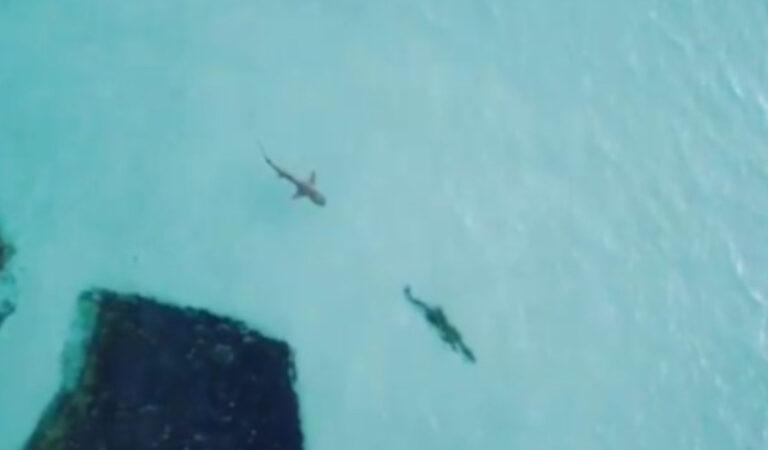 """""""Meglio di Godzilla e Kong"""": il video di uno squalo che caccia un coccodrillo fa il giro del mondo"""