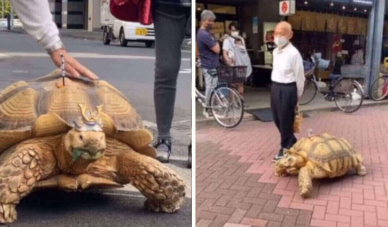 Bon-chan, la tartaruga gigante che cammina per le strade di Tokyo ed incoraggia i clienti di un'impresa di pompe funebri
