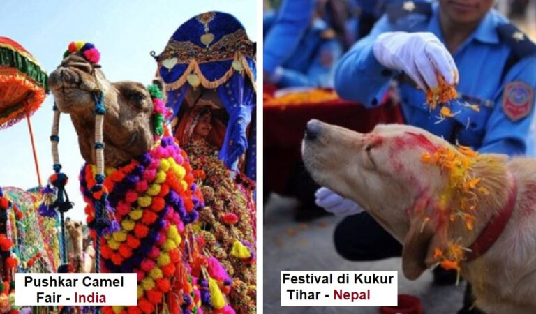 Feste dedicate agli animali: 8 festività nel mondo in cui l'uomo celebra delle creature del regno animale