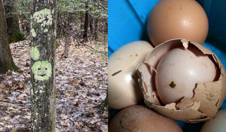 17 foto che mostrano che anche la natura ha un particolare senso dell'umorismo