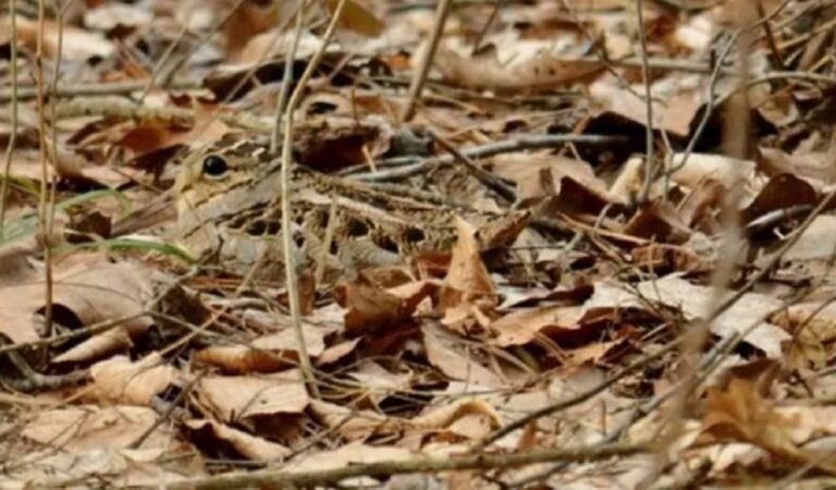 13 foto che nascondono un intruso. Difficile vederli al primo sguardo. Riuscite a vederli?