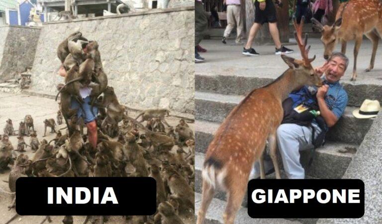 """10 Foto che mostrano come in altri Paesi vivono degli animali infestanti come i """"piccioni"""" in Italia"""