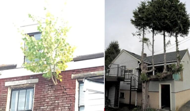 Mai arrendersi! 20 alberi che sono riusciti a superare alcuni ostacoli per sopravvivere