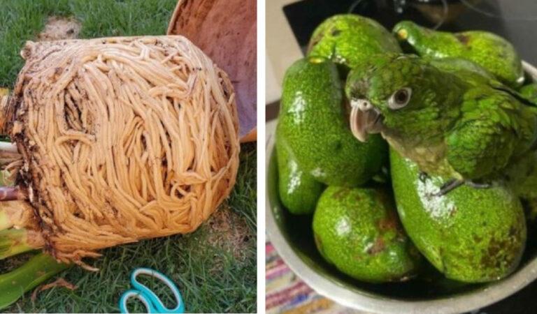Sembrano appetitosi ma non sono commestibili: 17 casi in cui oggetti e animali fingono di essere gustosi alimenti