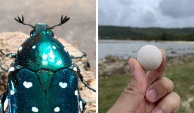 16 piccole sorprese che la natura ha creato e che la gente ha notato e apprezzato