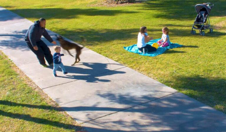 L'uomo inizia a correre verso il bambino e il cane entra in azione per proteggerlo