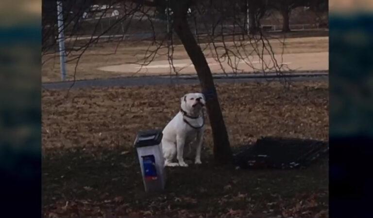 Il Bulldog tremante viene abbandonato al freddo con solo un bigliettino e le sue cose