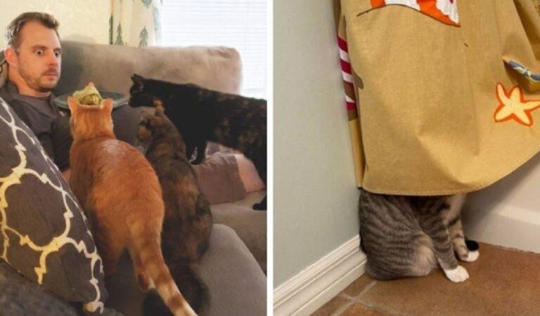 Come non adorarli! 16 abitudini feline che conoscono gli amanti dei gatti
