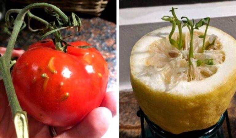 Sembrano incredibili: 16 casi particolari di frutta germogliata al suo interno