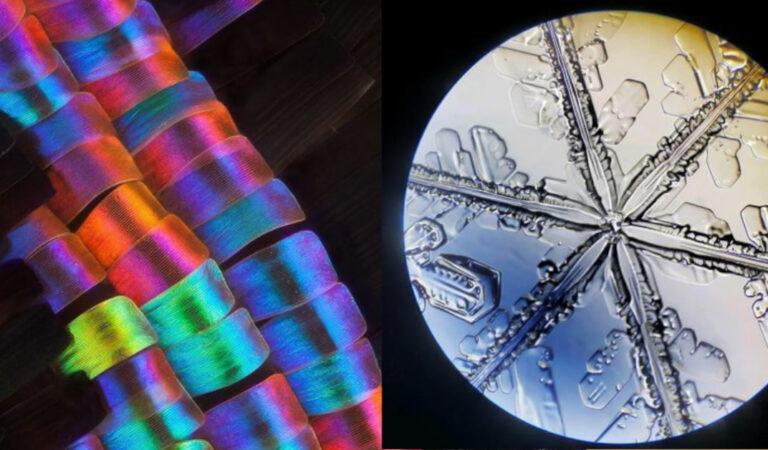 15 foto che mostrano quali segreti rivelano alcune cose intorno a noi osservate al microscopio
