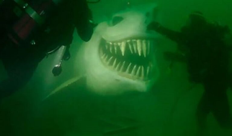 Paura del sommerso: 21 delle foto più spaventose raccolte sui social