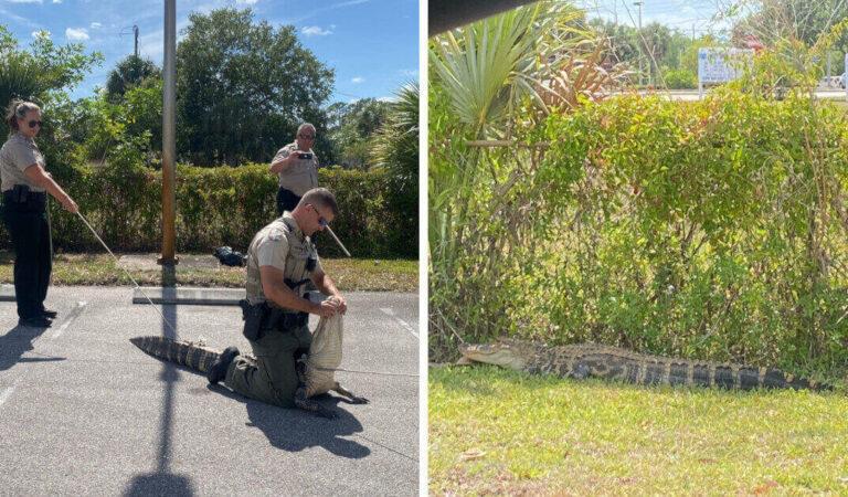 Un enorme alligatore provoca il panico e caccia i clienti fuori da un ristorante