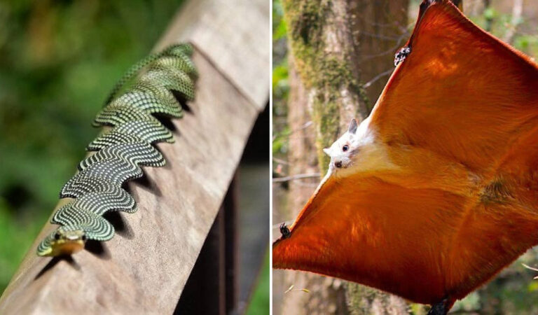 """""""Wow!"""" 15 affascinanti foto di animali selvatici che mostrano quanto la natura sa essere spettacolare"""