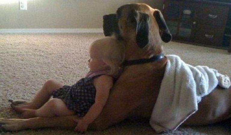 Che dolcezza! 15 cani molto grandi che sono pieni di tenerezza e amore verso i loro compagni umani