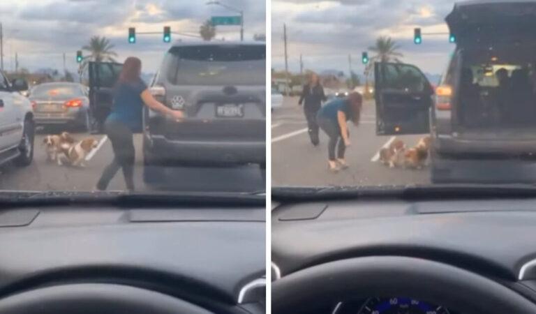 Una donna ferma il traffico per salvare tre cani che stavano per attraversare, nessuno li stava aiutando